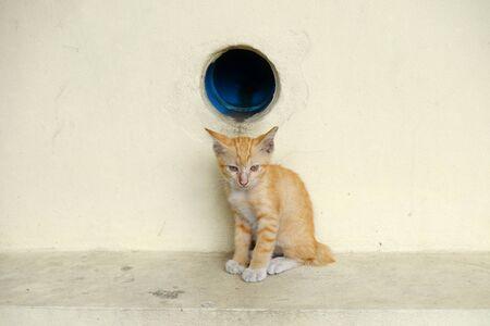 cat street floor with floor and wall
