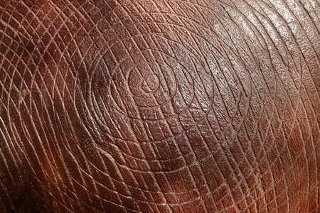 textured: Textured stucco