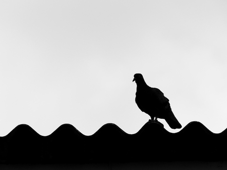 roof profile: Bird silhouette on the roof