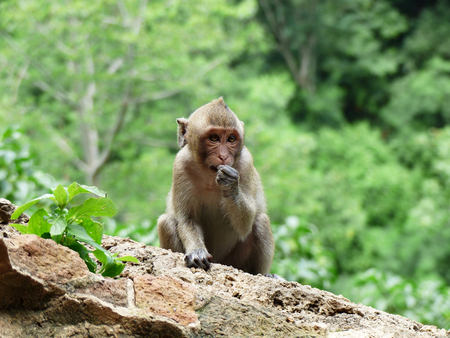 Monkey in front of cave