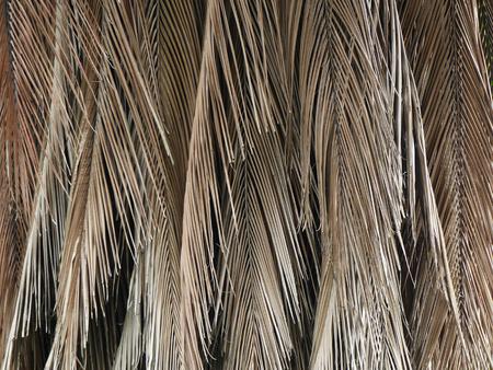 dry leaf: dry palm leaf