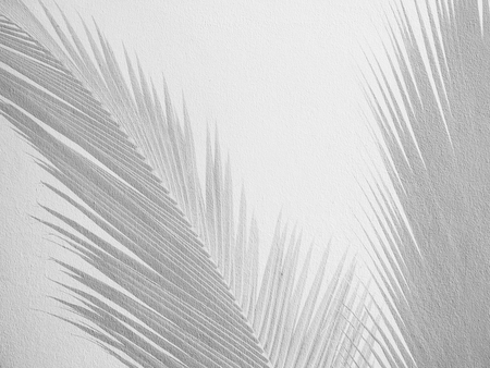 nearness: Palm leaf shadows on a white wall Stock Photo