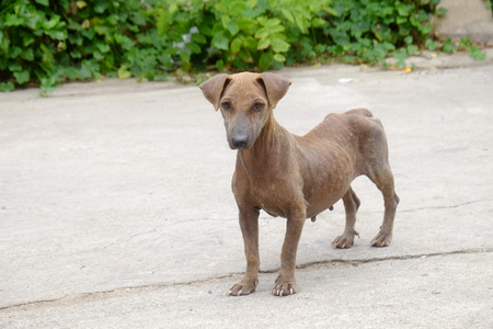 mangy: The mangy dogs and hairless street