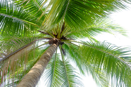 under coconut tree on the white background stock photo picture and