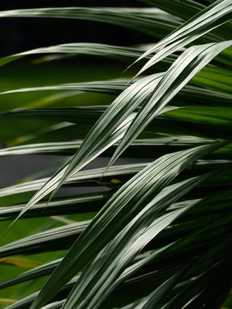 근접 촬영 아름다운 손바닥 햇빛에 나무의 잎