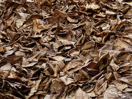 decomposition: pile of dry leaf