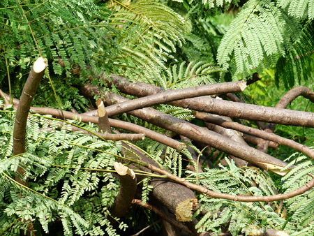 A pile of cut branch Stock Photo
