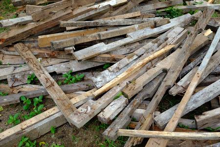 wood pile: Old wood pile