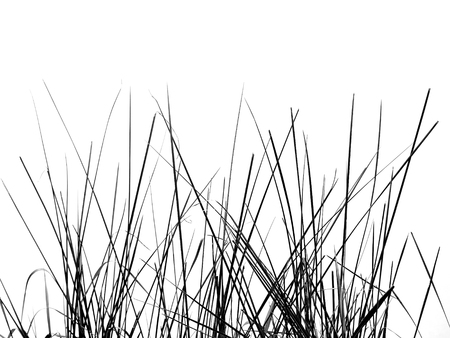 grass silhouette on a white background, isolated