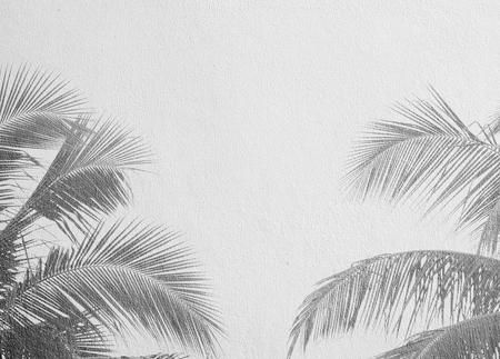 Palm leaf shadows on a white wall Reklamní fotografie