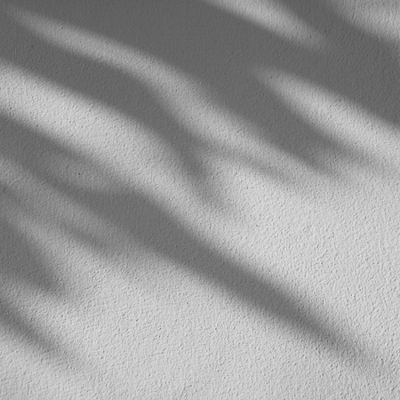 nearness: shadow of the leaves on a white wall