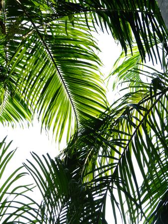 green palm leaf tree with shadow