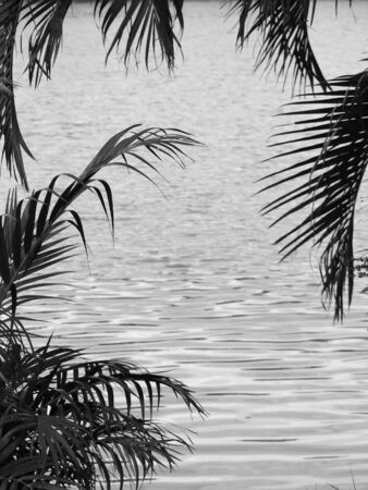 caribbean beach: black and white palm leaf  Stock Photo