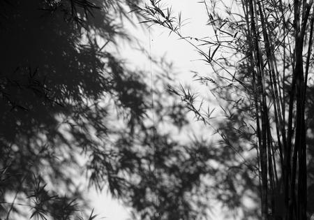 벽에 그림자가있는 흑백 대나무 나무 스톡 콘텐츠