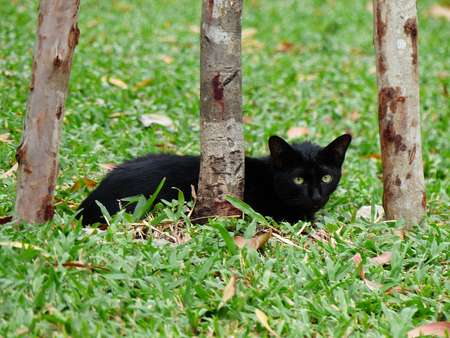 black cat on grass in garden