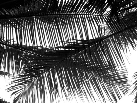 beautiful palm leaf on white background