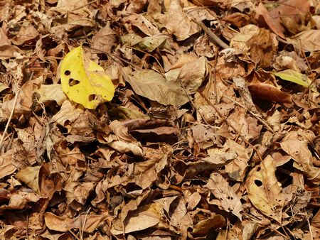 crook: pile of dry autumn leaf Stock Photo