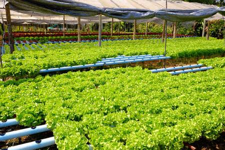 Organic vegetables in farm Stock Photo