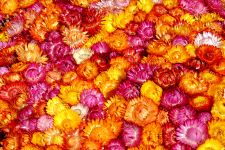 The group of straw flowers to sell in the local flower market Stock Photo