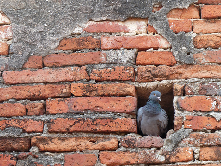 pigeon holes: Brick wall with the pigeon in hole