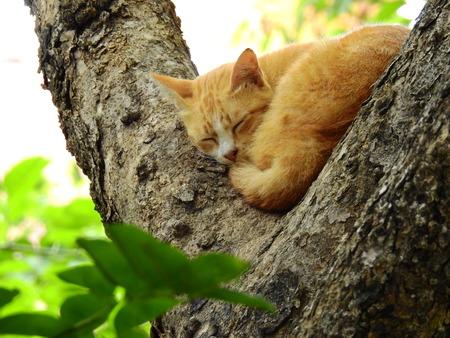 Cat sleep on the tree