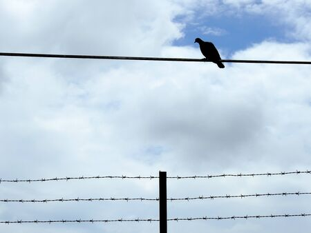 gaol: Silhouette bird on wire with barbed wire