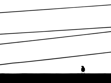 Silhouette bird on roof with wire