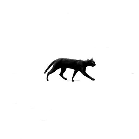 Cat walking motion on white background