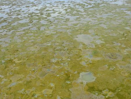 grooves: Flowing wet mud in wetlands texture