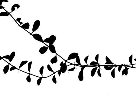 白い背景の上のツタ植物シルエット 写真素材 - 85101037