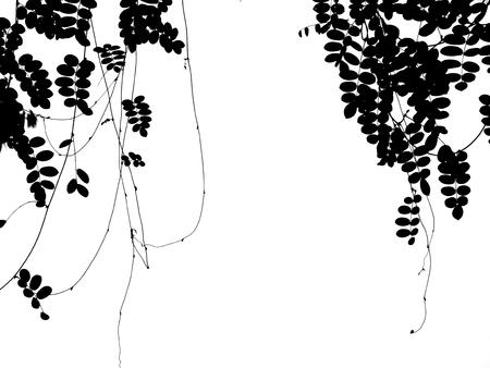 白い背景の上のツタ植物シルエット 写真素材 - 85101038