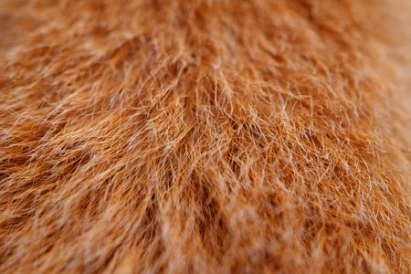 closeup dog fur texture