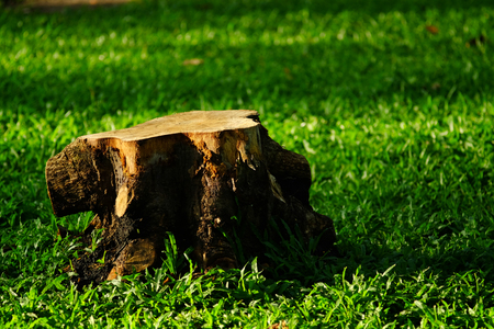 stump on grass lawn in nature