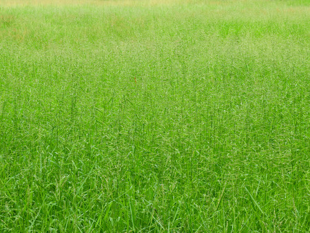 green grass of meadow in the field Stock Photo