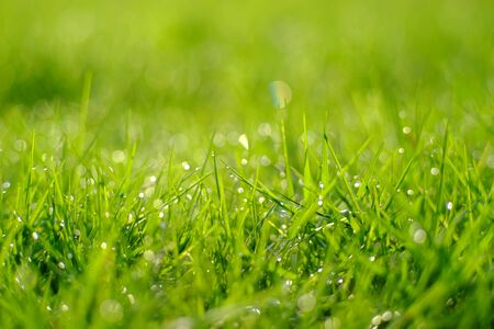 dew on leaf of green grass with bokeh of morning light in the lawn