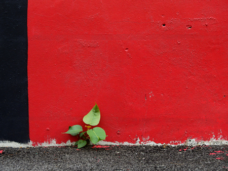aged street red wall with asphalt road and bodhi tree Stock fotó