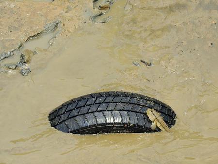 Mudskipper ( Periophthalmodon schlosseri ) on tire in wetlands