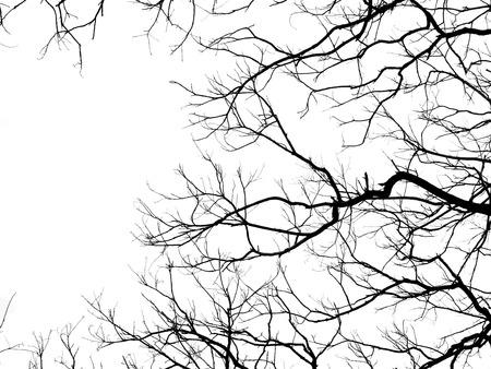 branche d'arbre silhouette sur fond blanc