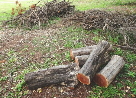 pile of wood logs on the ground in the park Banco de Imagens