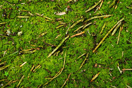green alga on the ground in the forest Imagens