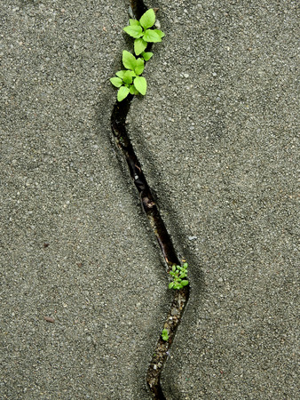 cement block of pavement floor with green plant