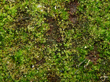 green moss on the ground texture