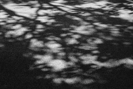 black and white shadow of tree on asphalt road Imagens