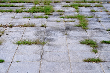abandoned street floor with green grass Imagens - 118713437