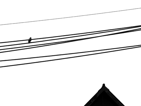 silhouette bird on electric wire with roof of home on white background Standard-Bild - 118771128