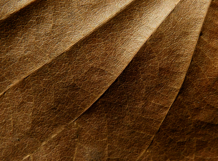 dry brown leaf texture