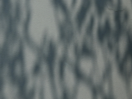 shadow leaves on gray wall bckground