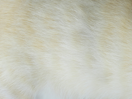 white hair of cat texture