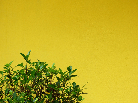 tree with yellow wall background Stockfoto