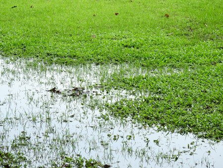 wet green grass lawn with water texture Stockfoto